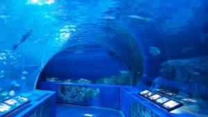 トンネル水槽,水族館